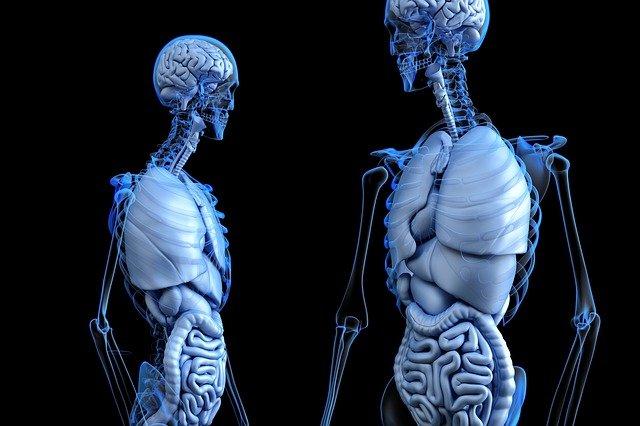 najteshki-organi-telo